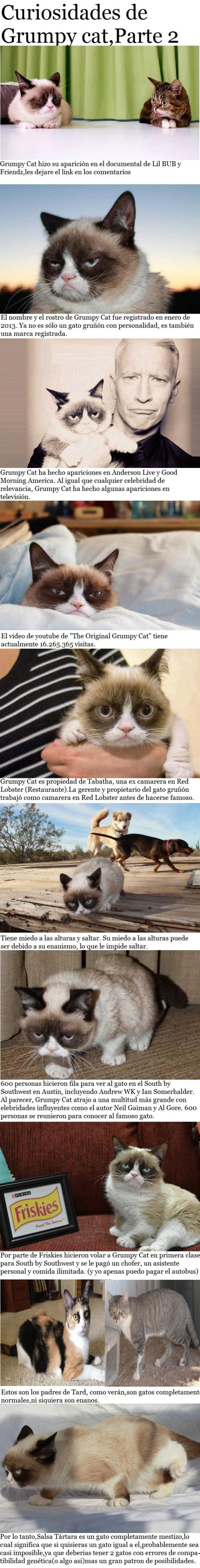 Grumpy_cat - Segunda y última entrega de las curiosidades sobre Grumpy Cat