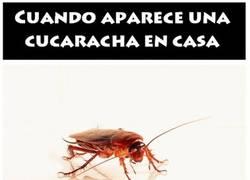 Enlace a Cuando aparece una cucaracha en casa