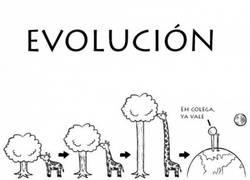 Enlace a Evolución de las jirafas