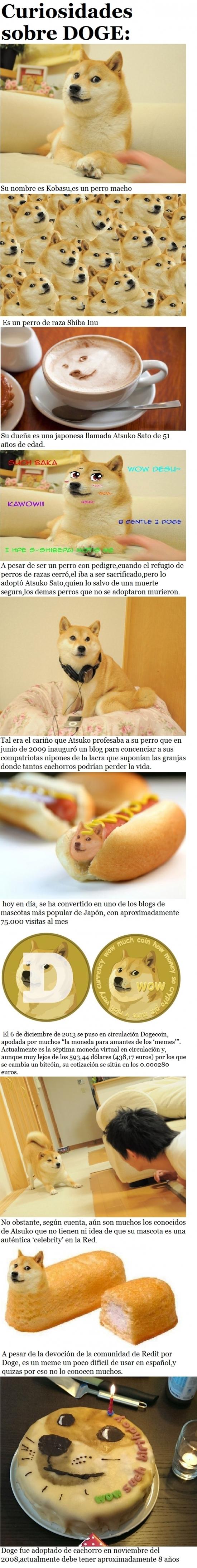 Meme_otros - ¿Conocéis el famoso meme 'Doge'? Aún sin ser famoso en España, aquí podréis conocerlo un poco mejor