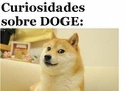 Enlace a ¿Conocéis el famoso meme 'Doge'? Aún sin ser famoso en España, aquí podréis conocerlo un poco mejor