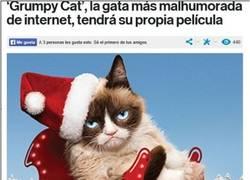 Enlace a Grumpy Cat, la estrella de cine a regañadientes