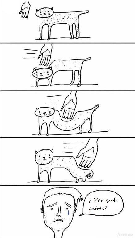 Otros - Gatos que son el máximo exponente de la ranciedad