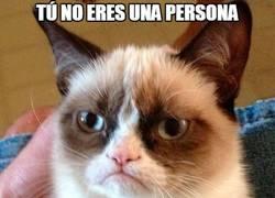 Enlace a Grumpy cat, ¿qué soy?