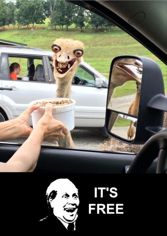 Its_free - A todo el mundo le gustan las cosas gratis, hasta a las avestruces