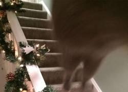 Enlace a Mala idea acercarte a tu gato cuando juega con los adornos navideños