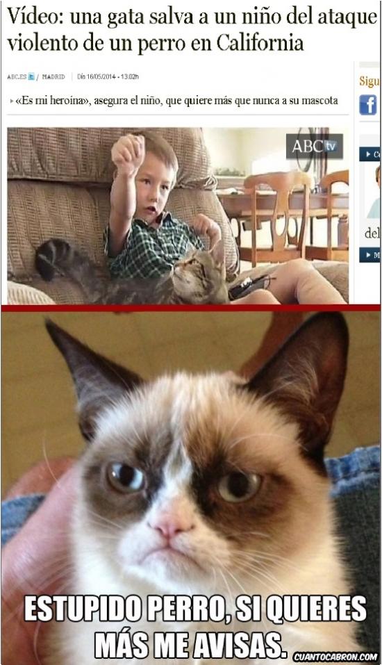 Grumpy_cat - Esto podría ser obra de Grumpy fácilmente
