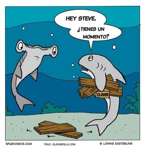 Otros - La dura vida de un tiburón martillo