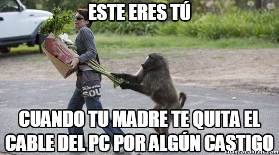 babuino,cable,castigo,madre,mandril,mono,quitar