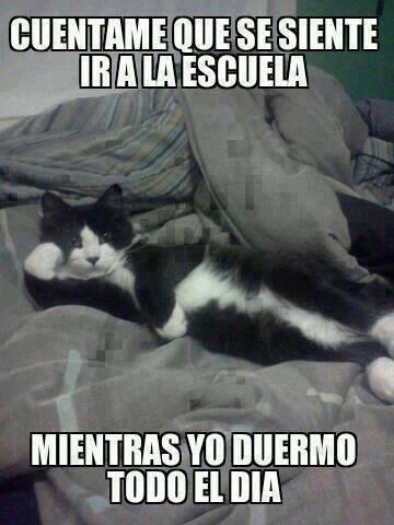 Wonka - ¡Malditos gatos!