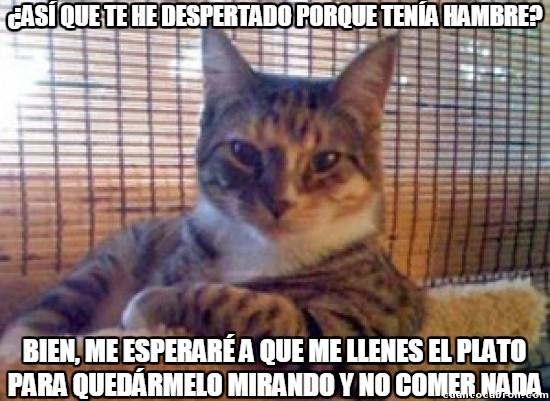 Meme_otros - Así son los gatos