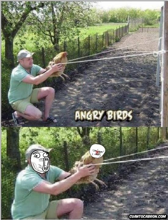 Otros - Angry Birds llevado a la vida real