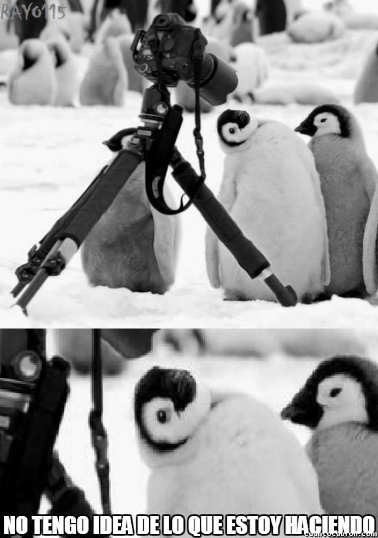 Meme_otros - El pingüinito fotogénico