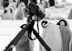 Enlace a El pingüinito fotogénico