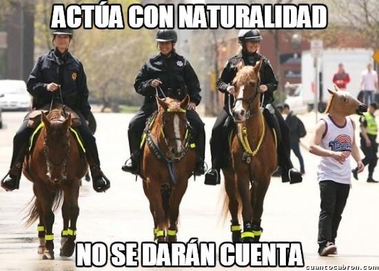 Meme_otros - ¿Qué hay extraño en esta imagen? Yo solo veo 4 caballos...
