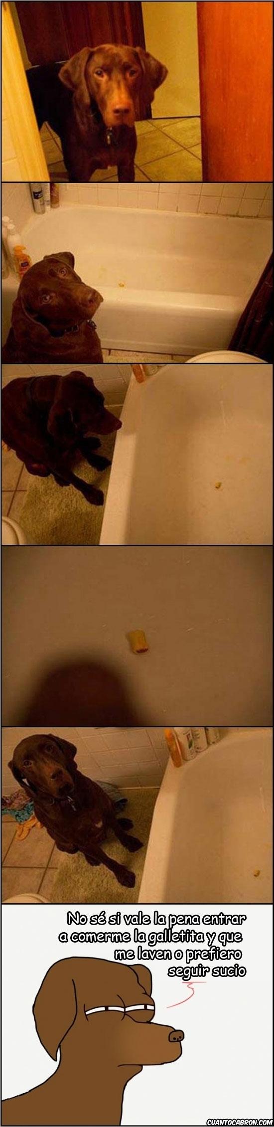 Fry - Los perros no son tan tontos como pensamos