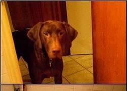 Enlace a Los perros no son tan tontos como pensamos