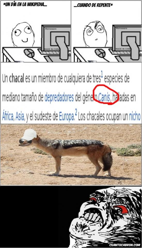 Inglip - El chacal, de la familia de las canis