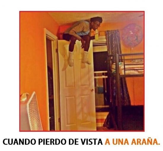 Meme_otros - ¿Miedo a las arañas?