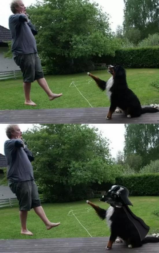 Otros - El perro de Darth Vader
