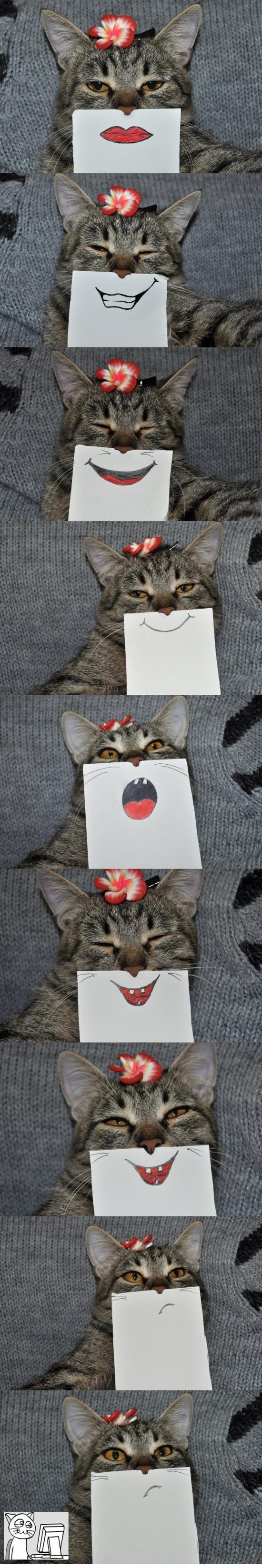 Computer_guy - Esto pasa cuando estás solo con tu gato y tienes demasiado tiempo libre