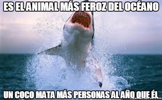 Meme_otros - Vistos así, los tiburones parecen inofensivos