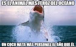 Enlace a Vistos así, los tiburones parecen inofensivos