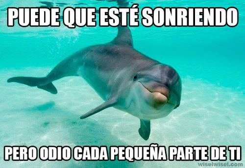 Meme_otros - La verdadera perspectiva de los delfines sobre los humanos, y con razón