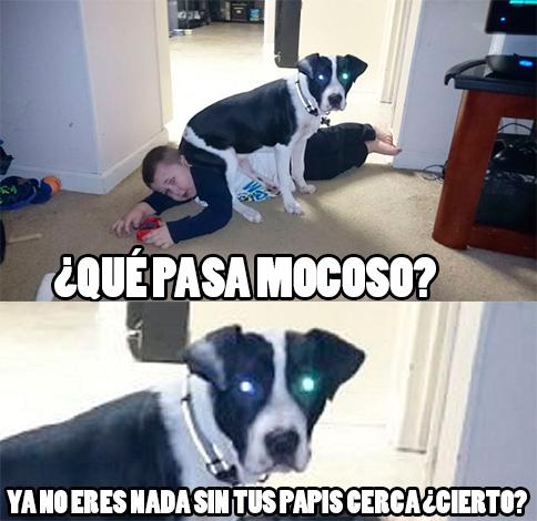 Meme_otros - Por esta razón, mejor tratad bien a los perros