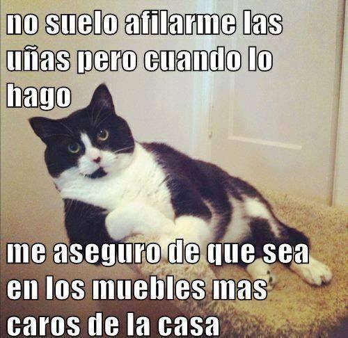 Meme_trollface - Así suelen funcionar los gatos