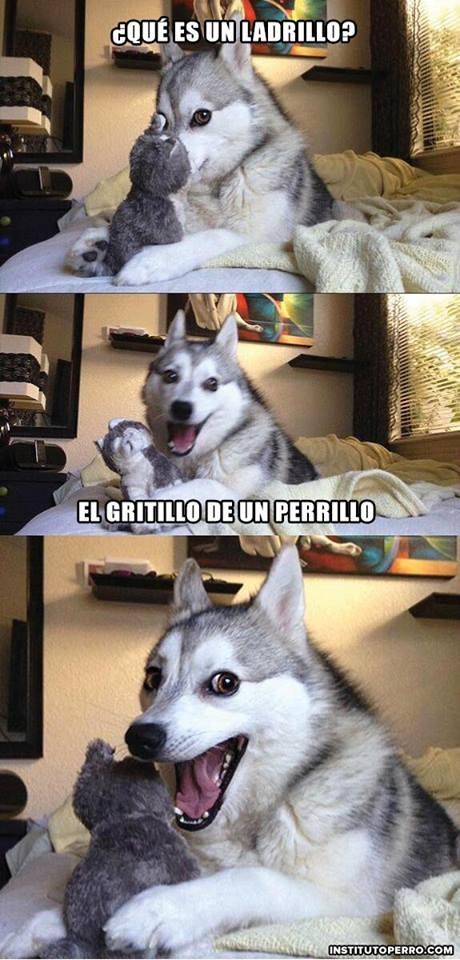 Meme_otros - El perrillo graciosillo