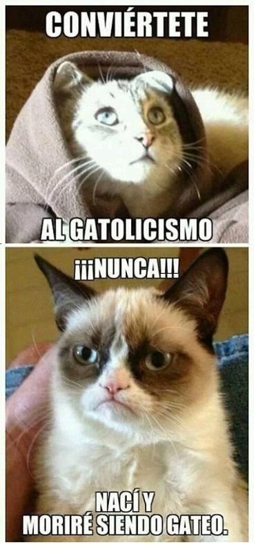 Grumpy_cat - Religiones felinas