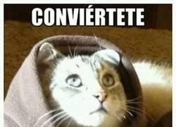 Enlace a Religiones felinas
