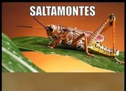 Enlace a El insecto más sobrevalorado