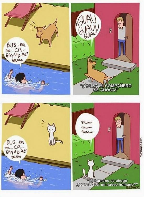 Otros - La pequeña diferencia entre perros y gatos