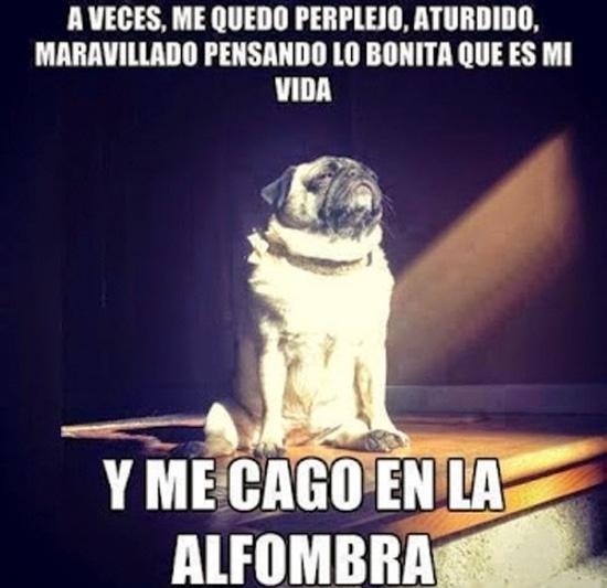 Meme_otros - Los perros y sus cuestiones filosóficas