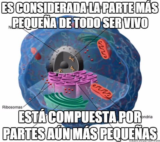 Meme_otros - La paradoja de la célula