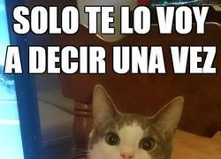Enlace a Los gatos no bromean con la comida