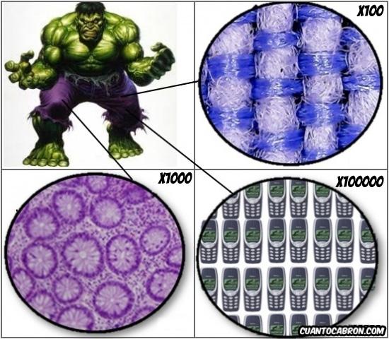 Otros - Y por eso aguantan tanto los pantalones del Hulk