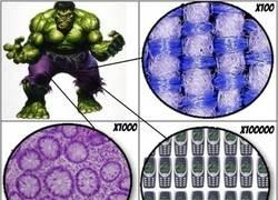 Enlace a Y por eso aguantan tanto los pantalones del Hulk
