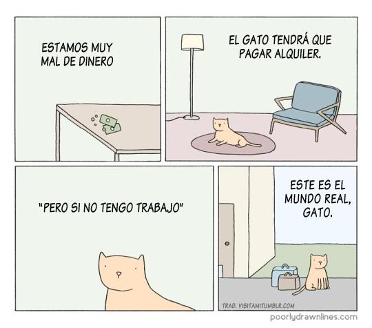 Otros - ¡Este es el mundo real, gato!