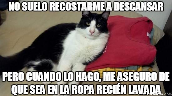 Meme_otros - El gato más interesante del mundo y sus costumbres