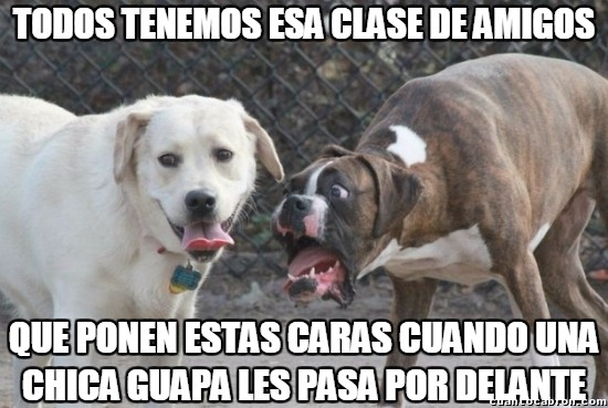 Meme_otros - Amigos como perros en celo