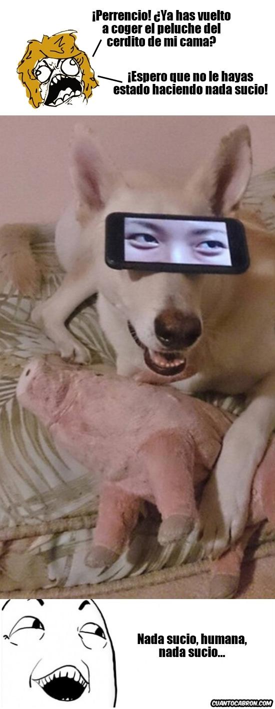 Si_claro - Hay perros que tienen la mente más sucia de lo que te puedas imaginar
