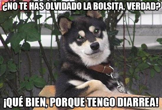 Meme_otros - El perrito siempre atento para ponerte la vida más fácil