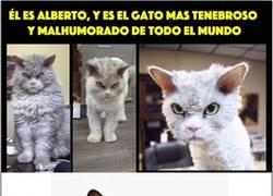 Enlace a Se va completando la familia de Grumpy Cat
