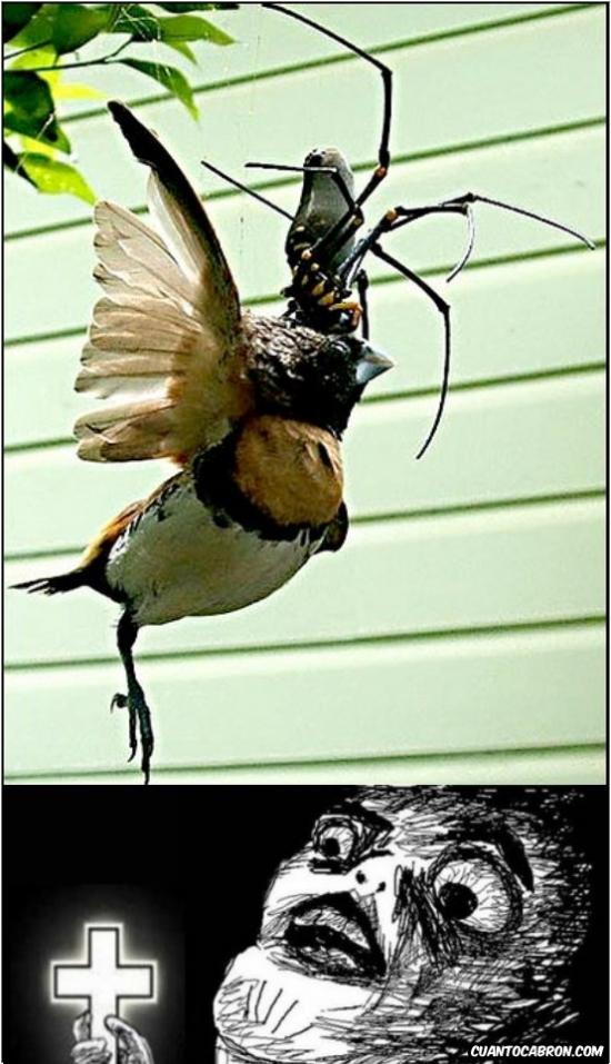 Inglip - No le tengas miedo a las arañas, decían...