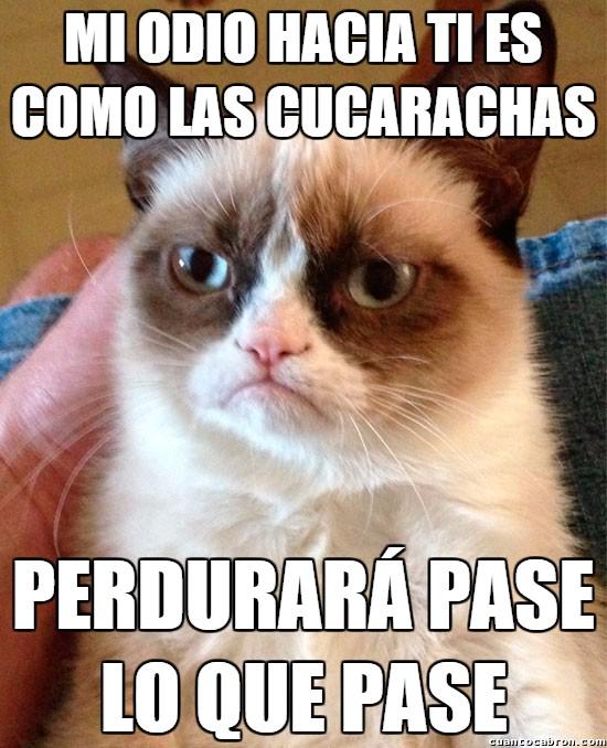 Grumpy_cat - Tú y las cucarachas