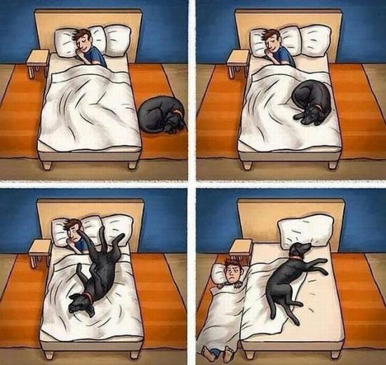 Otros - No es muy recomendable dormir con perros ena habitación