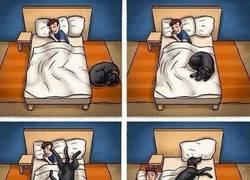 Enlace a No es muy recomendable dormir con perros ena habitación